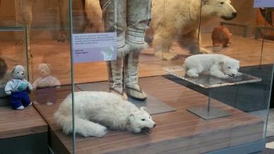3-little-bears