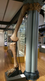 giant-leg-bone