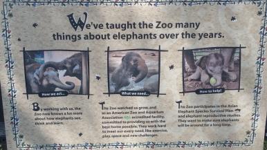 Elephants for teachers?