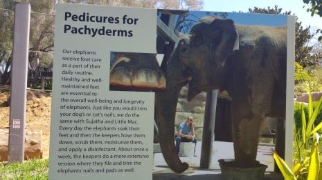 Elephant pedicures?