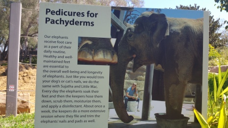 Elephant pedicures?