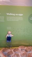 Walking on eggs