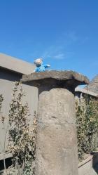 I climbed to the top!