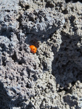 There were ladybugs everywhere!