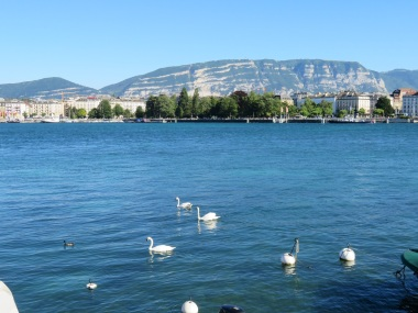 Swans live in pairs