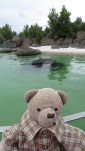 Where the seals roam