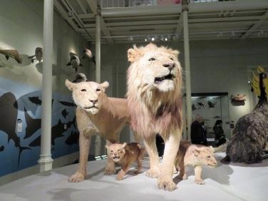 Pride of proud lions
