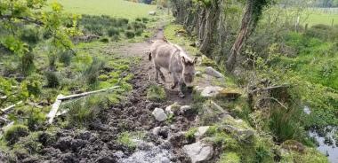 Donkey at the farm