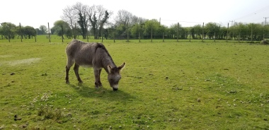 Lunch time for donkeys too
